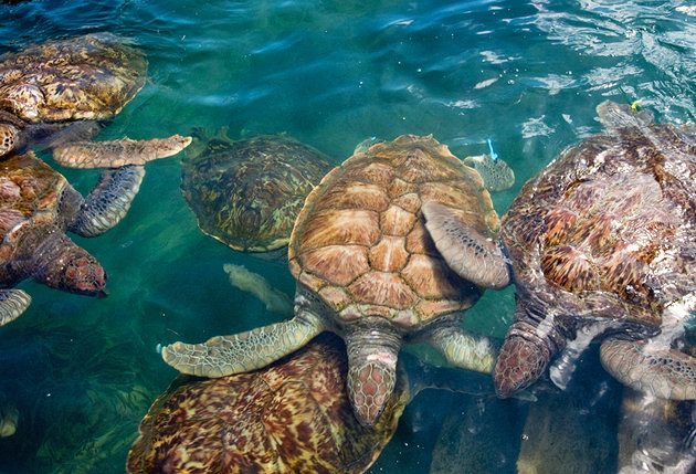 Georgetown Grand Cayman Island Things To Do